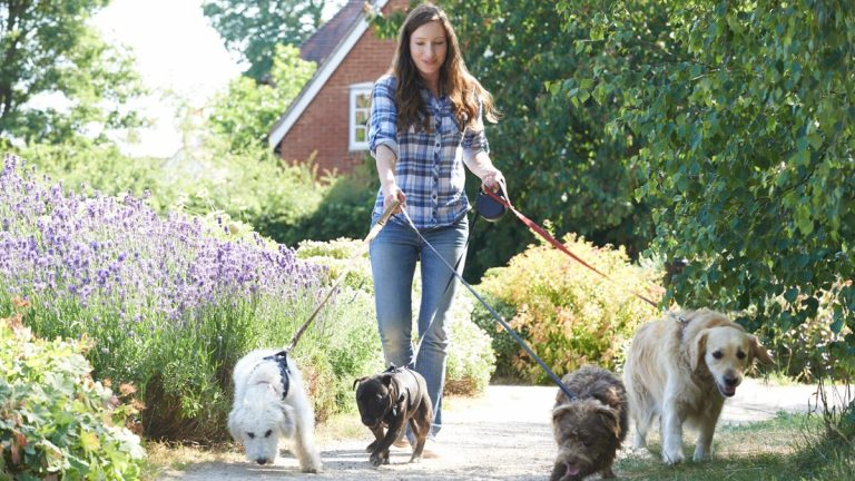 Girl walking dogs
